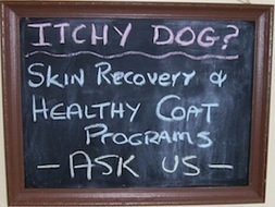 Our 8 Week Plan to Treat your Dog's Itchy Skin - Leo's Pet Care | Dog Health Advocacy | Scoop.it