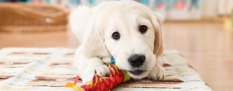 Don't Forget Your Furry Friends: Pet Friendly House Design   Home builders in New Zealand   Generation Homes   Scoop.it