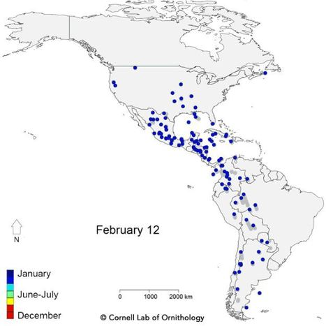 Mesmerizing Migration: Watch 118 Bird Species Migrate | Geography Education | Scoop.it