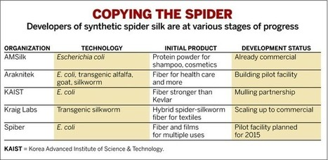 Five Times Stronger Than Steel: Spider Silk Finally Poised For Commercial Entry | Amazing Science | Scoop.it