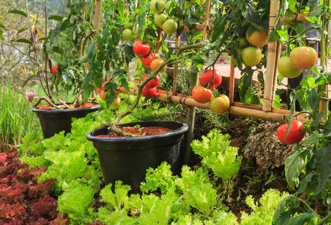 Community Gardens: How to Plant Your First Sustainable Crop - Heal Estate | jardins partagés | Scoop.it