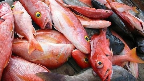 Useful seafood handling tips ~ Seafood Buyers and Suppliers | Seafood-Trade | Scoop.it