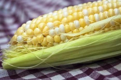 Etude sur les OGM: un coup de publicité du Pr Séralini? | Actualité de l'Industrie Agroalimentaire | agro-media.fr | Scoop.it
