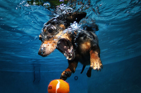 Underwater dogs – in pictures | Art, photography, design, tech, culture & fashion | Scoop.it