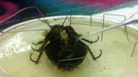Scientists Have Wired a Cockroach, Matrix-Style | Technoculture | Scoop.it