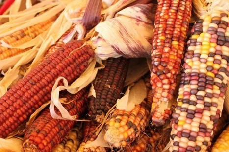 Can Native American Groups Combat Obesity By Returning To Indigenous Diets? | Cultural competency resources for training and education | Scoop.it