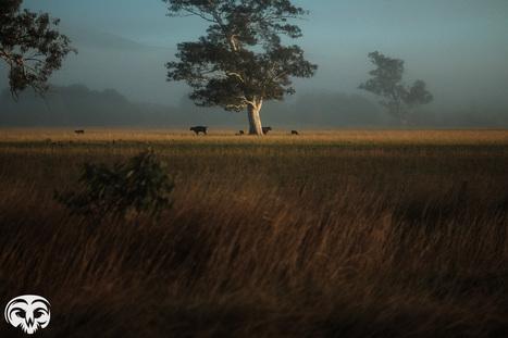 Riding Through Australian Countryside with the Fuji XT-1 | Caveira Photography | Photography - Fuji | Scoop.it