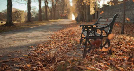 Autumn Red 35 or 50mm? |  David Cleland | Fuji X-Pro1 | Scoop.it