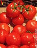 Alimentos Transgénicos | Alimentos Transgénicos | Scoop.it