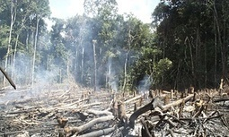 Half of #Amazon tree species at risk of #extinction if #deforestation continues #Brazil | Messenger for mother Earth | Scoop.it