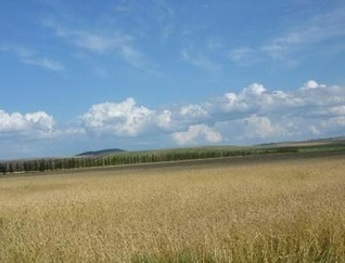Insight: Siberian agriculture could benefit from climate change - environmentalresearchweb | Agriculture and Climate Change | Scoop.it