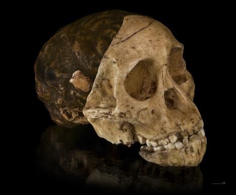 Bigger brains led to bigger bodies in our ancestors | Heritage Daily | Kiosque du monde : A la une | Scoop.it