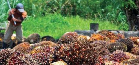 Only 38% of RSPO Palm Oil Production Is Sustainable, WWF says   Sustainable Brands   Sustain Our Earth   Scoop.it