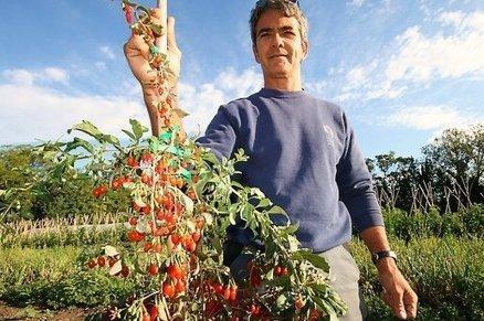 Le goji : du Tibet au Roussillon, parcours d'un nouveau fruit | Comprendre le réel intérêt de produire une agriculture BIO en France plutôt que d'importer des produits présentant un label pas vraiment Certifié. | Scoop.it