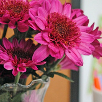 Bring Flowers into the Office to Increase Productivity and Reduce Anxiety | Troy West's Radio Show Prep | Scoop.it