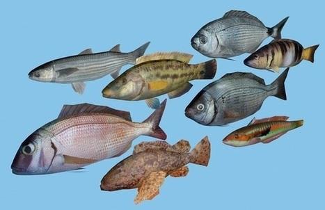 Ribe Jadranskog mora | Ribolov | Scoop.it