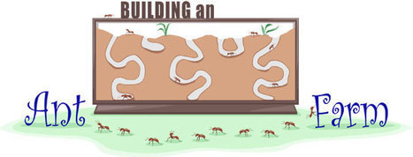 Build an Ant Farm | ASU - Ask A Biologist | All About Ants | Scoop.it