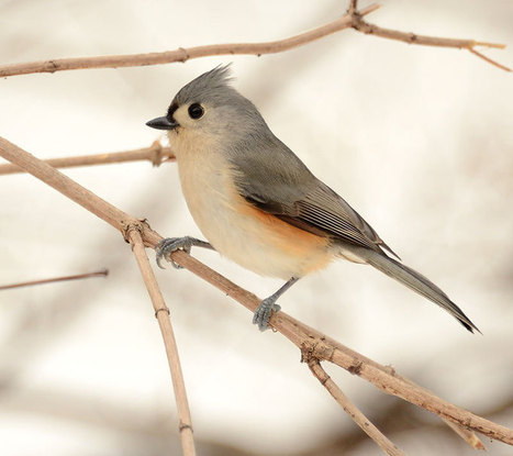 How to Lure Wild Birds - Winter is for the Birds | Cottage Gardening | Scoop.it