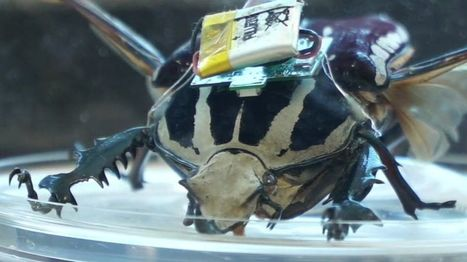 Could these cyborg beetles save lives? | Technology in Health and Social Care | Scoop.it
