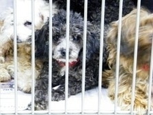 Pet Shops Puppy Mills -- Consumers Get the Truth | Pets and Aquariums | Scoop.it
