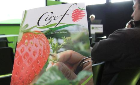 La fraise, de la recherche à nos assiettes, en présentation sur Vinitech Sifel - Aqui.fr | Agriculture en Gironde | Scoop.it