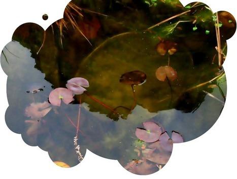 Jardinons-ensemble ! | jardins partagés | Scoop.it