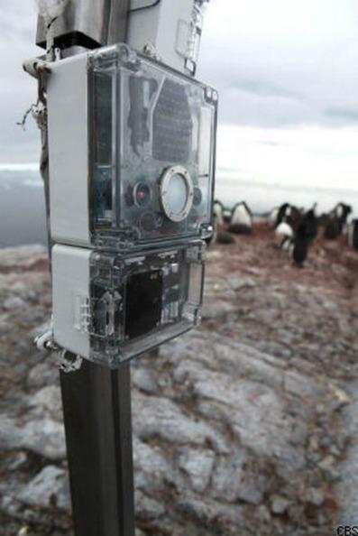 Raspberry Pi moniters penguin population! | MakerTech, Makerspaces and DIY | Scoop.it