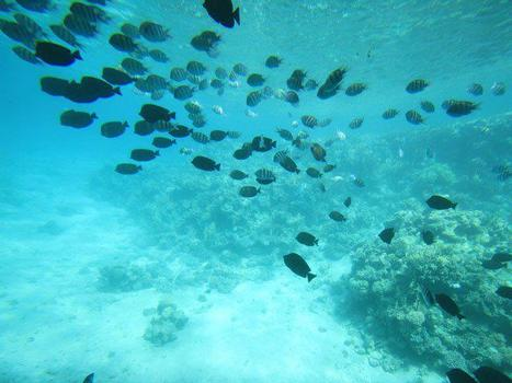 The red sea   Blue sky travel   Scoop.it