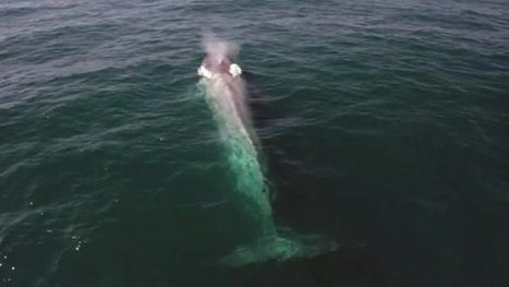 Blue whale's perfect timing to photo bomb TV presenter - CBBC Newsround | Liv & Røre | Scoop.it