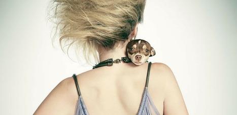 Vuoi Creare una linea d'abbigliamento per cani? | Blog Chic4Dog | Dog Style | Scoop.it