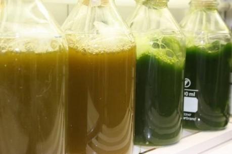 Caractérisation des microalgues pour la production de biodiesel ...   The Blue Industrial Revolution   Scoop.it