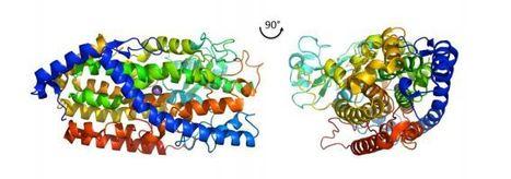 Crystal Structure of Manganese Lipoxygenase of the Rice Blast Fungus Magnaporthe oryzae | Rice Blast | Scoop.it