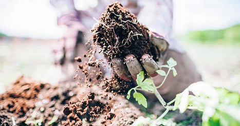 How the World's Most Fertile Soil Can Help Reverse Climate Change | Permaculture, Horticulture, Homesteading, Bio-Remediation, & Green Tech | Scoop.it