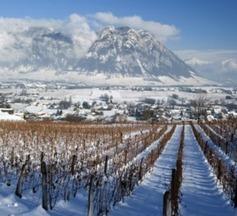 Déficit en Savoie : 115 000 hl de vin produits en 2015   IRWT - Vins de Savoie & du Bugey   Scoop.it