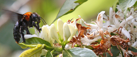 Scientists propose ten policies to protect vital pollinators - Press Release - UEA | Organic Farming | Scoop.it