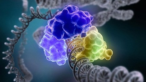 The Secrets Behind DNA Repair Revealed | Interesting Scoop | Scoop.it