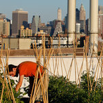 In Rooftop Farming, New York City Emerges as a Leader | Vertical Farm - Food Factory | Scoop.it