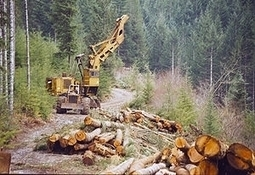 A Supremely Important Decision About America's Logging Industry | Timberland Investment | Scoop.it