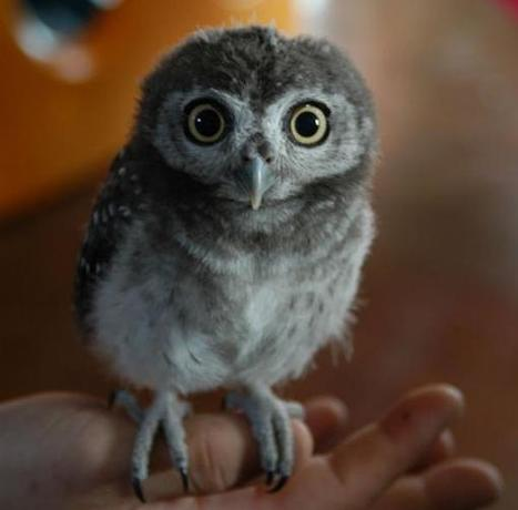 15 Ridiculously Adorable Baby Owls | Owls | Scoop.it
