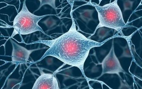 Une puce novatrice pour enregistrer l'activité du cerveau   ✨ L'iMedia en Santé Humaine ✨   Scoop.it