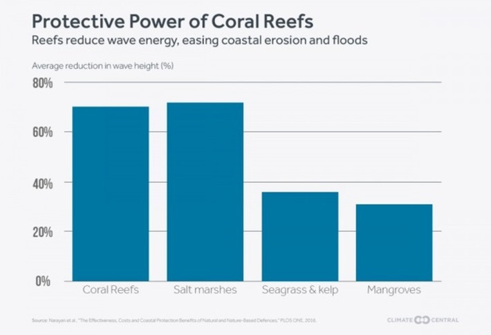 Coral Deaths Threaten Coasts With Erosion, Flooding | Océan et climat, un équilibre nécessaire | Scoop.it