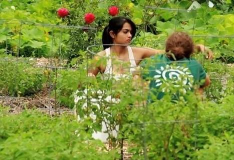 5 increíbles vídeos de permacultura | Cultivos Hidropónicos | Scoop.it