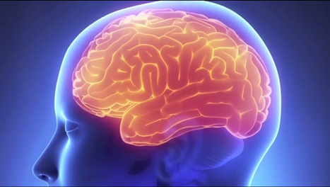Researchers Find Brain Activity That May Mark the Beginning of Memories | BrainLovers | Scoop.it