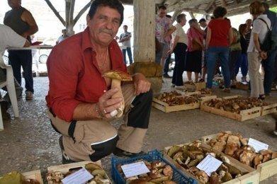 La folie des cèpes | Agriculture en Dordogne | Scoop.it