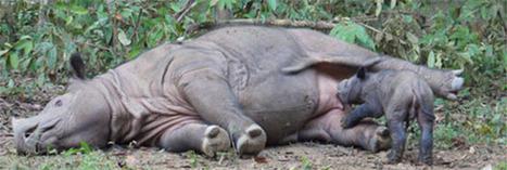 Les derniers rhinocéros du Mozambique ont été tués | The Blog's Revue by OlivierSC | Scoop.it