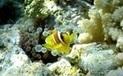 Agents de voyages : comment vendre des séjours de plongée sous-marine ? | Travel Chic | Scoop.it