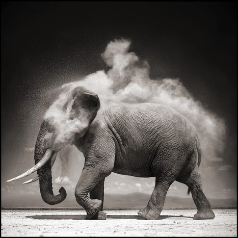 ON THIS EARTH (2000-2004) ★ Nick Brandt | waouh | Scoop.it