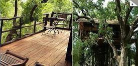 Tree House Hideaway – one of the best resorts in India for solitude seekers! | A Traveler's Guide to the Perfect Holiday Package | Scoop.it