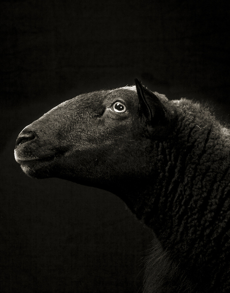 Photos That Capture the Souls of Sheep and Goats - Feature Shoot | Photographie B&W | Scoop.it
