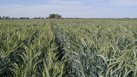 Actividad agrícola como eje, para cumplir metas de crecimiento ... - Mi Morelia.com   Banano   Scoop.it